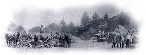 Threshing, ca. 1900